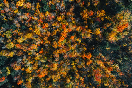 Aerial high angle view of wood in fall scenery, colorful trees in Vermont, United States Foto de archivo