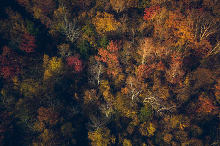 Aerial high angle view of forest in fall scenery, colorful trees in Vermont, United States