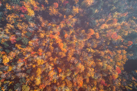 Top down view of colorful forest treetops with light leaks, fall season. Vermont, United States