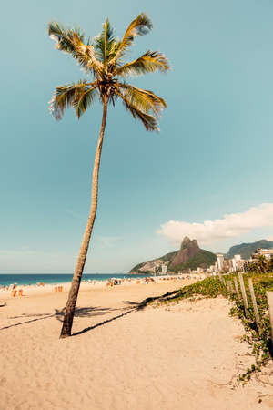 Single Palm on famous Ipanema Beach, Rio De Janeiro, Brazil. 版權商用圖片