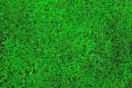 sprinkle system: green grass