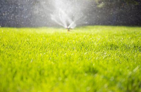 lawn grass: watering the garden Stock Photo