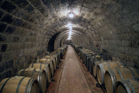 wineyard: wine cellar