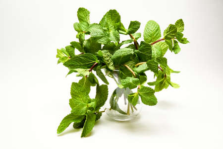 sprigs of mint in a glass on a white background