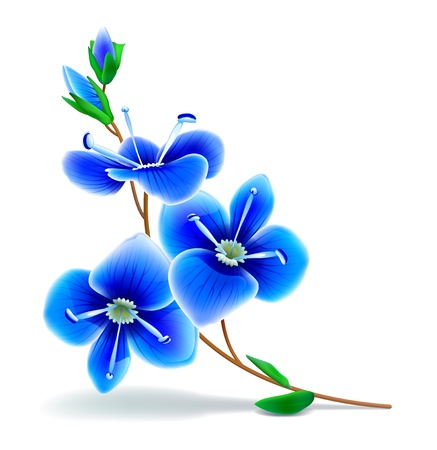 Blue flowers on a white