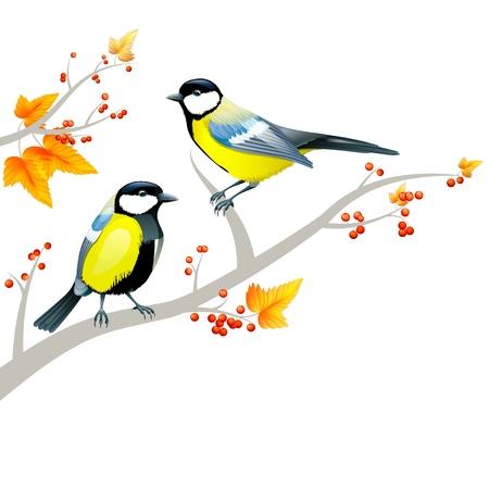birds on tree Stock Photo - 17479398