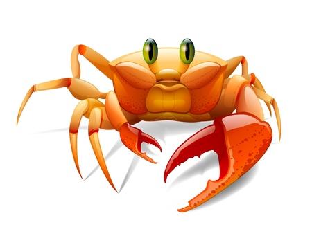 Crab Stock Photo - 17479402