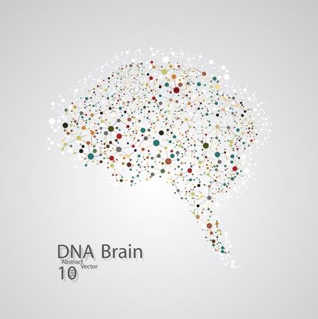 nervios: La estructura molecular en forma de cerebro Vectores