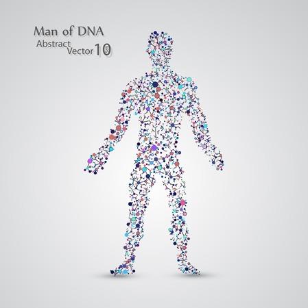 La estructura molecular en forma de hombre Ilustración de vector
