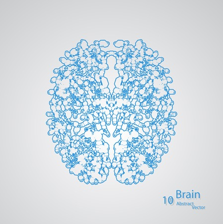 gyrus: Creative concept of the human brain