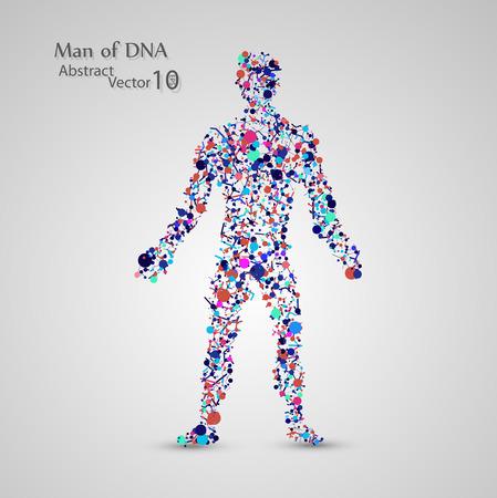 celulas humanas: La estructura molecular en forma de hombre Vectores