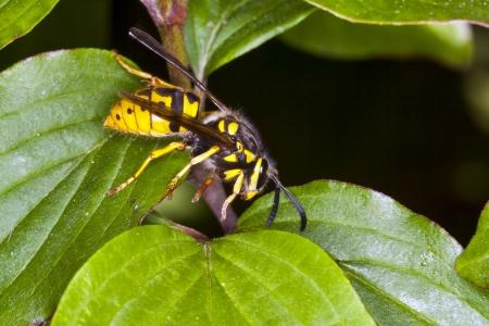 wasp on leaf