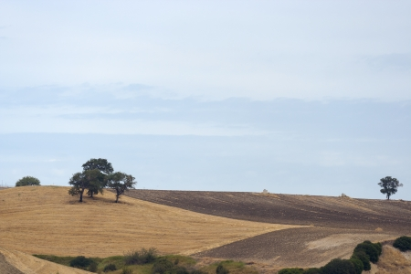 Landscape of the hills of Apulia Italy