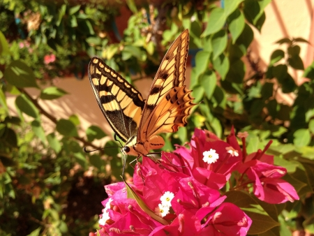 machaon: Butterfly machaon on a flower Stock Photo