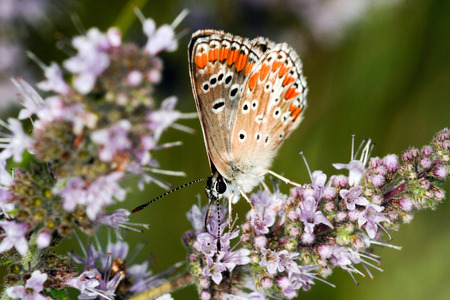 butterfly eating on a flower in a meadow Stock Photo