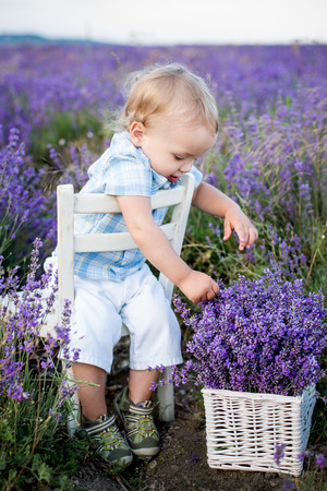 Toddler cute boy playing in a lavender field photo