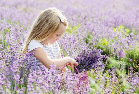 lavanda: cute little girl is going to a lavender field