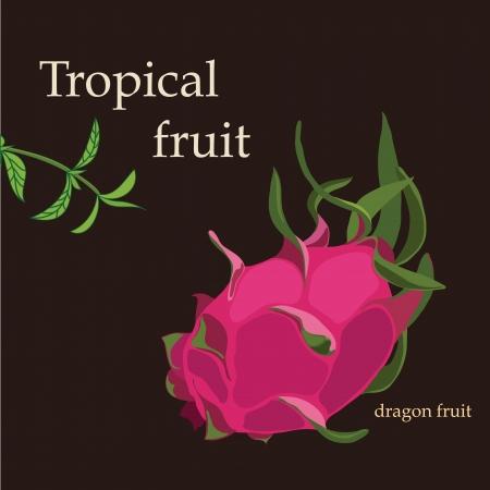 dragon fruit: Tropical  dragon fruit Illustration