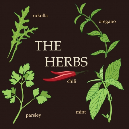 Organic herbs, design set Vector