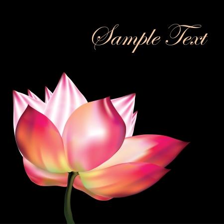 azahar: Pink lotus sobre fondo negro
