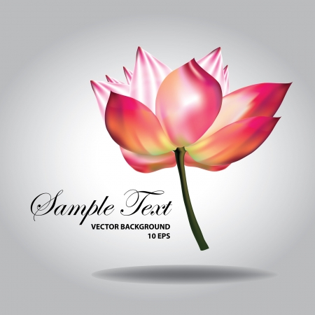 Beautiful pink lotus  Illustration