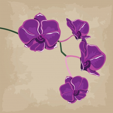 Floral pattern with orchids illustration. Vector