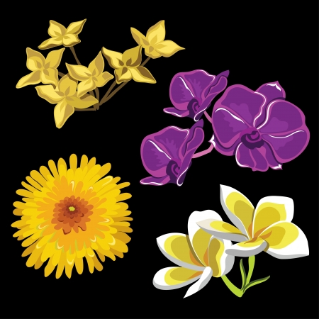 Set of realistic flowers, isolated on black background  illustration  Vector