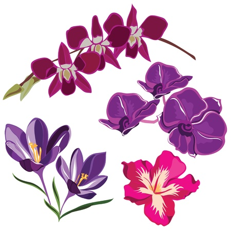 Set of realistic flowers  illustration  Vector