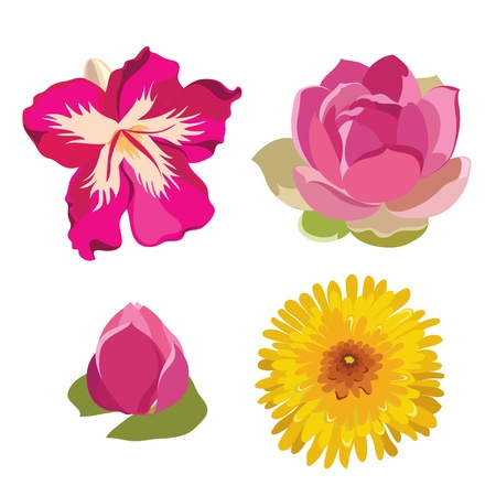 Set of realistic flowers. illustration. Vector