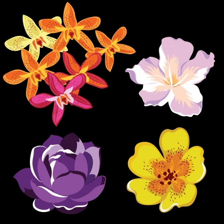 Set of realistic flowers, isolated on black background.Vector illustration.