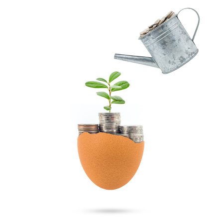 Plant growing on coins in egg broken concept for investment, retirement on white background.