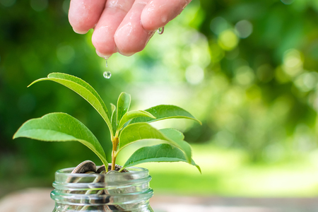 Coin in jar with plant growing, Save money and investment concept