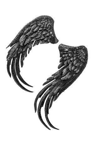 cisnes: Acero ala posterior y blanco oscuro Foto de archivo