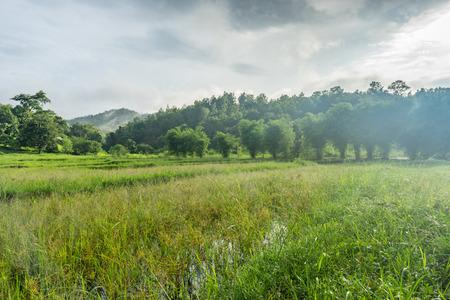 paisaje natural: sunlight with Natural landscape
