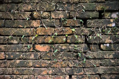 old brick wall: old brick wall
