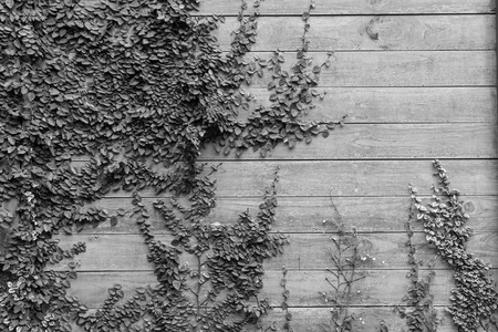 green wall: Wood wall with tree Stock Photo