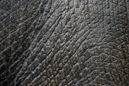 fake: elephant texture Fake