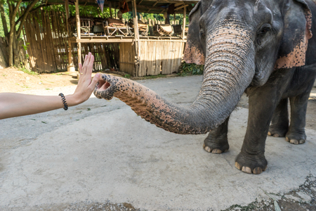 give me five: Elephant give me five with women hand