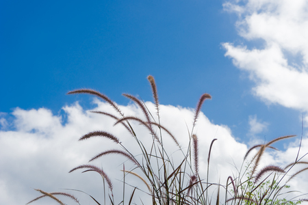 Grass Flower and blue sky Stock Photo