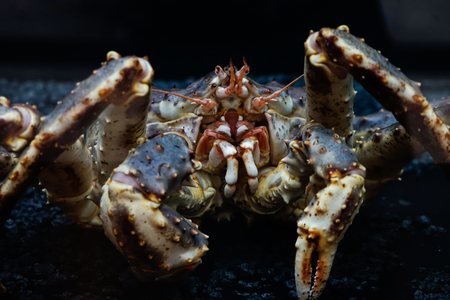 the crab with black background Stock Photo