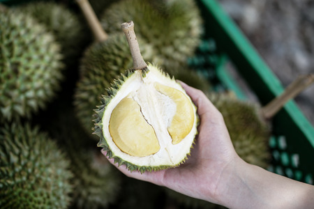 mini Puang Manee durian on woman hand