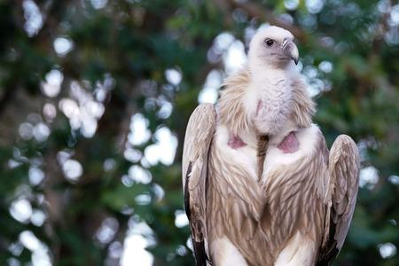 the white vulture in jungle
