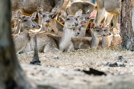 Group of deer are sitting in the jungle