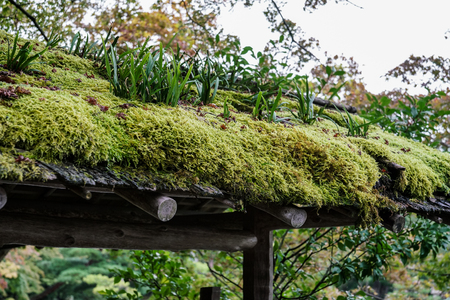 Green moss on wooden roof top