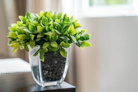 Green Plant Glass Pot