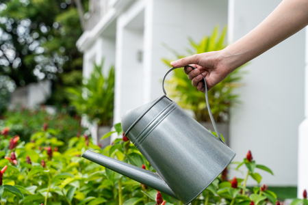 watering plants with watering can in the garden