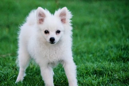Cute Little White Dog Sitting in the Grass