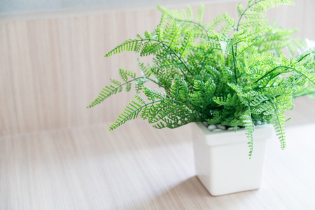 Fern with White pot On Wooden table Imagens