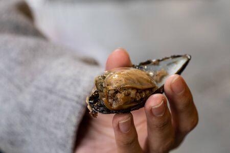 Turkish traditional food stuffed mussels with rice Midye Dolma. 写真素材
