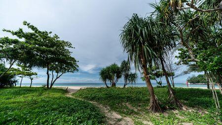 Ipomoea pes-caprae on sand beach. Sandy walkway to the sea beach on blue sky background